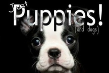 ◄««Puppies are from Heaven»»► / by Lil Nerdy