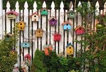 Garden / by Rachelle Hilman