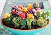 Gardening / Gardening - Gardening tips, tricks, DIYs, Plantation - growing veggies and Much more !