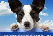 Favorite Places & Spaces / by Pets America