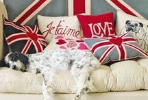 Pet Style! / by Pets America