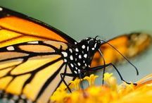 Butterfly Jungle / Celebrate the beauty of butterflies with us at the Safari Park. www.sdzsafaripark.org/butterflyjungle