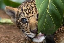 Baby Animals / WARNING: Cute overload.