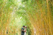 Wild Wedding / Nature-inspired wedding ideas