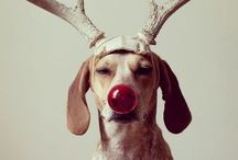 jingle bells. / by Gillian Holte