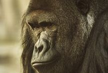 Primates / Celebrating all the beautiful shapes and sizes of the order we belong to.