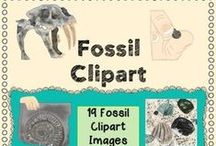 Fossils / fossil activities and lesson plans