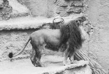 San Diego Zoo 100 / Explore 100 years of stories, photos, memories, and more.