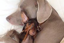 Doggies / by Terra Walker