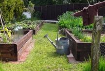 edible garden set up / by happyhome