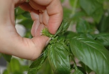 edibles: herbs & spices / by happyhome