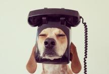 Good Doggy Maddie / by Rasmus C. Frandsen