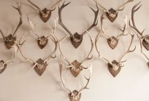 TAXIDERMY & HORNS