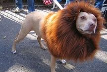 costumes for dogs and cats / by Humboldt Pet Supply