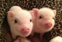 Piggies / by Terra Walker