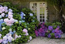 Giardini , terrazzi , fiori , orti / by Francesca Valle