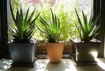 PLANT ME...