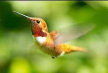 Backyard Birds / Backyard birds - how to attract them and feed them
