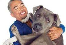 Baileys Gift Animal Welfare  / by HourGlassGirl Productions