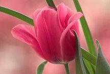 Flowers, flowers, more flowers! / Beautiful flowers from everywhere! / by Robin DeLong-Makin