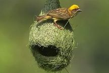 Fly Away Home... / Birdhouses and nests... / by Robin DeLong-Makin