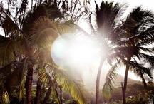 ↚ Summer ☀ Sun ↛ / Live in the sunshine, swim the sea, drink the wild air. / by ⋆ Eɭeɳa⋆