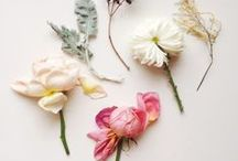 Blooms   Florals