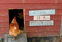 chickens & coops / raising chickens & building chicken coops