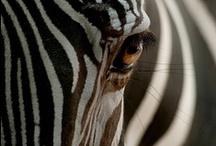 { HOME } animals / by Inês Seabra