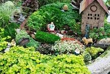 Garden - Terrarium & Dish Gardens / by Nancy Lewis