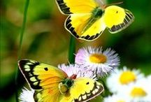 Butterflies / by Carole C Dixon