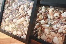 Shells! / by Renee Davis