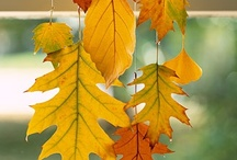 Fall Decorating / by Nancy Lewis
