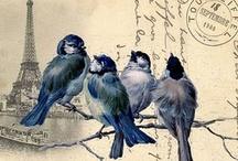 Printables - Birds