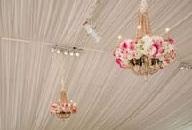 Tents / Draping / by Social Butterfly