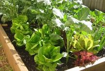 garden DIY / by pidoubleg