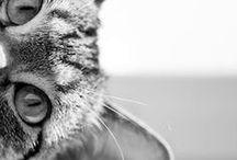 Cat's Land