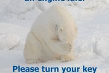 Take Action! / Saving polar bears by saving their habitat. / by Polar Bears International