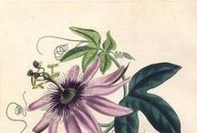 ::BOTANICAL & NATURAL ILLUSTRATIONS::