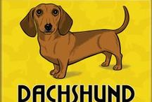 Doxie love / Yes, I'm owned by a dachshund and proud of it! / by Dorothy Tso