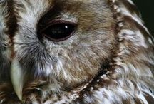 owls / by Becky Strahle