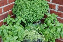 GROWING HERBS / Tips, tricks, and inspiration for growing herbs in the garden.
