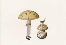 mushroom / by Noriko Kitahara