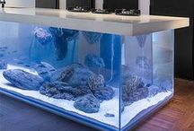 Hip Aquariums, Fish Bowls and Fish Tanks / A selection of modern and unusual fish tanks, fish bowls and aquariums from If It's Hip, It's Here.  / by laura l.