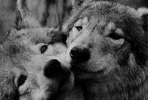 Wolf & Deer