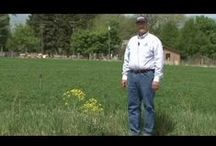 Rid Your Yard of Weeds / by Utah State University Extension