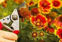 HOW TO PRUNE EVERYTHING / Tips to prune all kinds of plants