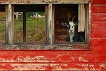 farms and barns / A place of wonders, where people and nature share as one
