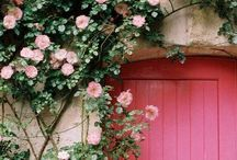 Rose Cottage / by Stephanie Stamm