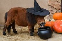 Halloween at The City Farm / In the spirit of pumpkin patches, hay rides and Halloween costumes, we're celebrating here at the farm with our mini horses!